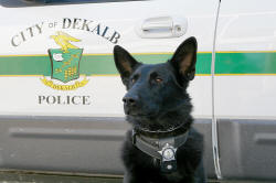Black Dog Posing in Front of Squad Car